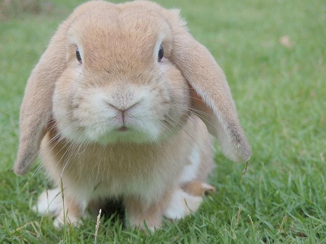 bunny-1149060_640